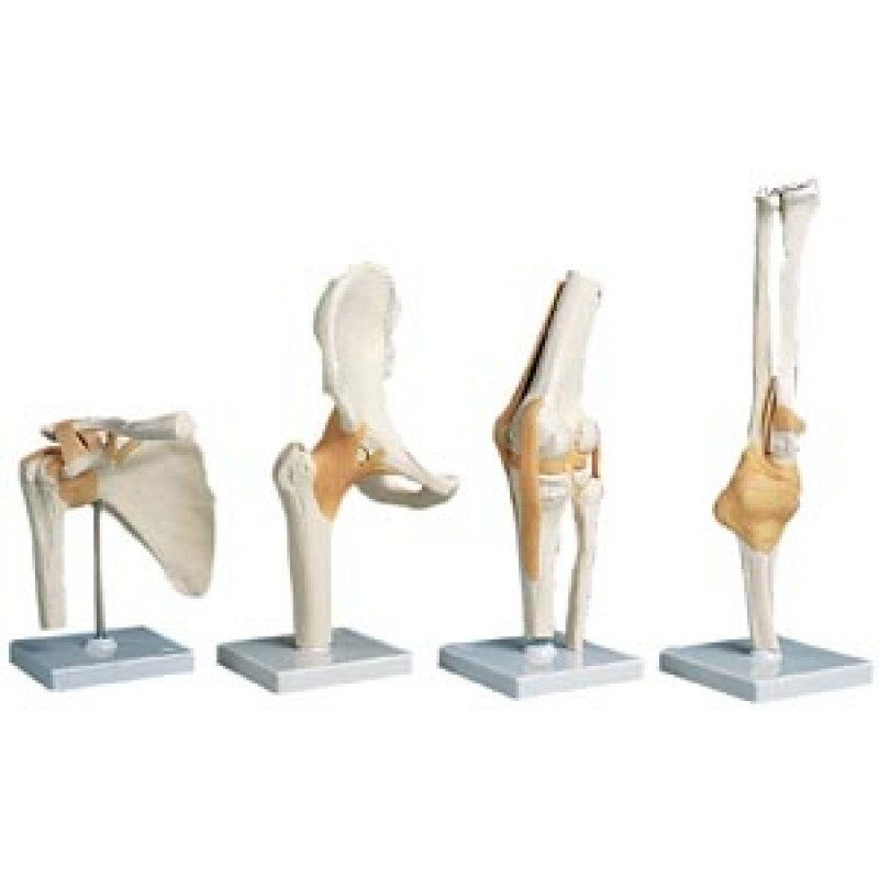Functional Right Shoulder Joint